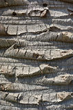Bark of palm trees Stock Photography