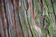Bark. Of a park tree with moss and resin Stock Images