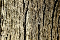 The bark. Part of the wood, wallpaper Royalty Free Stock Images