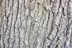 Bark pattern. The pattern of bark on an old oak tree making a great background stock image