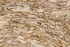 Bark pattern abstract. Royalty Free Stock Photo