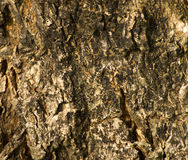 Bark pattern Stock Photography