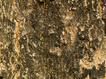 Bark pattern Royalty Free Stock Image