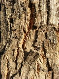 Bark pattern Stock Photo