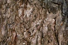 Bark pattern Royalty Free Stock Image