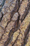 Bark patterns Stock Images
