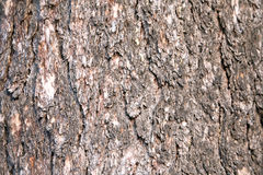 Bark of a pine. Background Stock Image