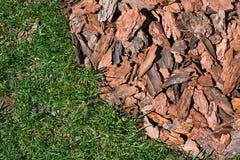 Bark of pine Stock Image