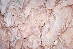 Bark pine natural patterns texture for background stock photos