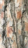 Relief texture of pine bark_ Relief texture of a scaly bark royalty free stock images