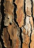 Bark Of A Pine Tree Stock Photos