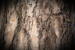 Bark of a pine tree Royalty Free Stock Image