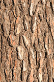 Bark of a pine tree Stock Photography