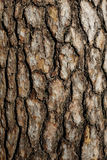 Bark of pine tree close up Stock Photo