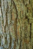 Bark of pine tree. Texture of pine bark photographed close up Stock Photo