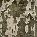 Bark of a plane tree. As a background motive Royalty Free Stock Photos