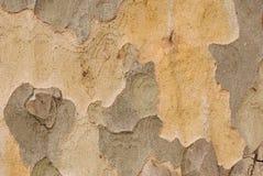 Bark of plane tree Royalty Free Stock Photo