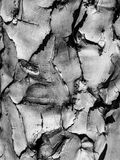Bark of quiver tree Stock Images