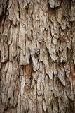 Bark of rain tree - highly detailed photograph Stock Images
