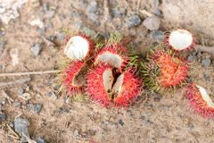 The bark of the rambutan was left as fresh waste royalty free stock images