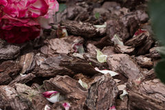 Bark with rose petals.Selective focus, toned image, film effect. Bark with rose petals. Selective focus, toned image, film effect Royalty Free Stock Images