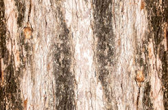 Bark rugged texture of tree Stock Photography