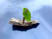 Free Bark Sailing Boat Stock Images - 151036884