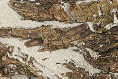 Bark on the sand. Royalty Free Stock Images