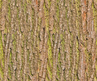 Bark seamless background Stock Photography