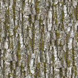 Bark. Seamless Texture. stock images