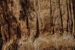 Bark of sequoia California Royalty Free Stock Image