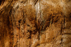Bark of sequoia California Royalty Free Stock Photos