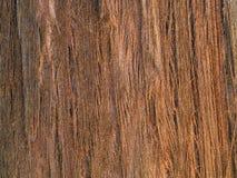 Bark of Sequoia Sempervirens tree Stock Image