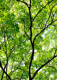 Bark silhouette and leaf green. Royalty Free Stock Images
