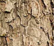 Bark of spruce tree Stock Photo