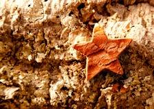 Bark star shape christmas symbol on cork Royalty Free Stock Images