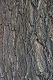 The bark of a statue of a willow as a background. Stock Photos