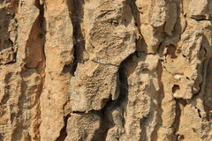 Bark. Striped bark Indicate the age of a tree Royalty Free Stock Photography