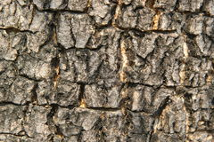 Bark. Striped bark Indicate the age of a tree Stock Images