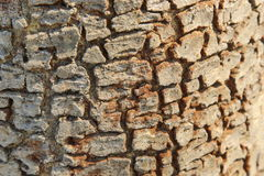Bark. Striped bark Represents Age of trees Stock Images