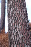 Bark Stock Photography