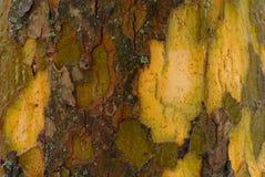 Bark surface.  Stock Image
