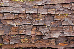 Bark surface cracked Royalty Free Stock Photography