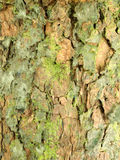 Bark surface Stock Images