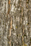 Bark surface with moss Royalty Free Stock Image