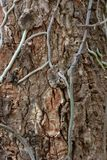 The bark surface with the roots of the orchid flower stuck. Grunge trunk vector illustration