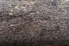 The Bark surface. And texture Royalty Free Stock Photo