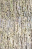 Bark surface. Royalty Free Stock Image