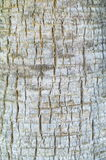 Bark surface. Royalty Free Stock Images
