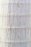 Bark surface. Royalty Free Stock Image